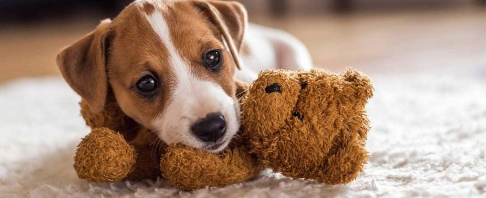 small-dog-names