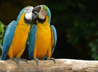 572d310f0dfe9-aves-brasileiras