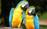 pantanal animais faz san francisco fotos robertacoelho018