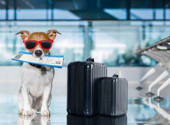 viajar-aviao-cachorro